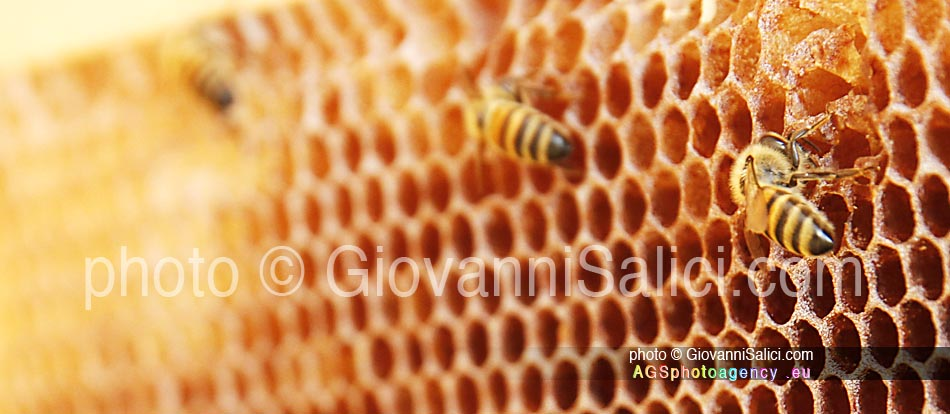 api ed immunità, un alveare di api da miele photo © Giovanni Salici